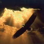 May we soar high and free as an Eagle with the breath of God under our wings