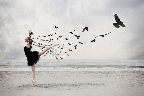 setting bird free